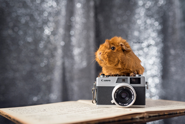 huisdierenfotograaf veghel